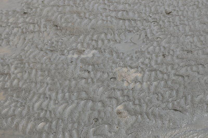 Wetlands mud stock photography