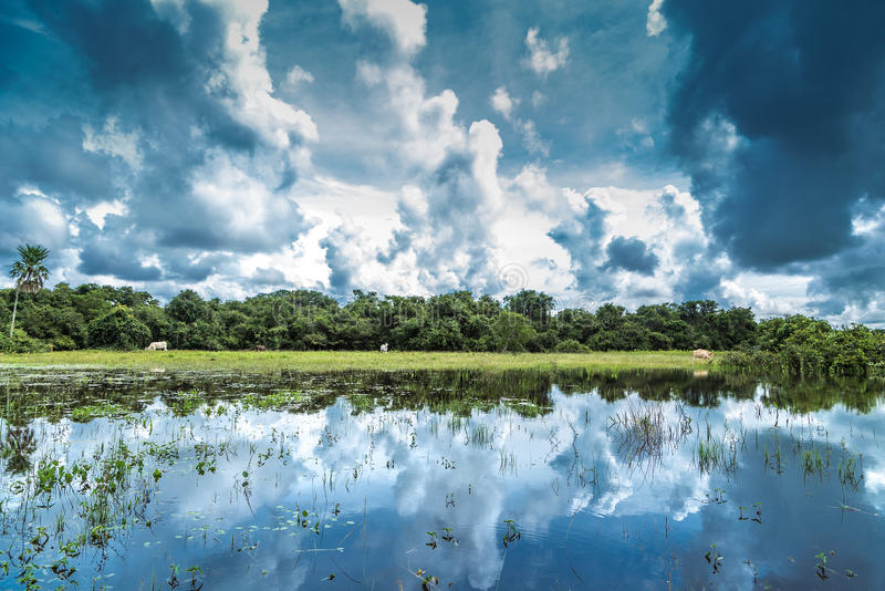 Wetlands in Pantanal, Brazil, South America stock image