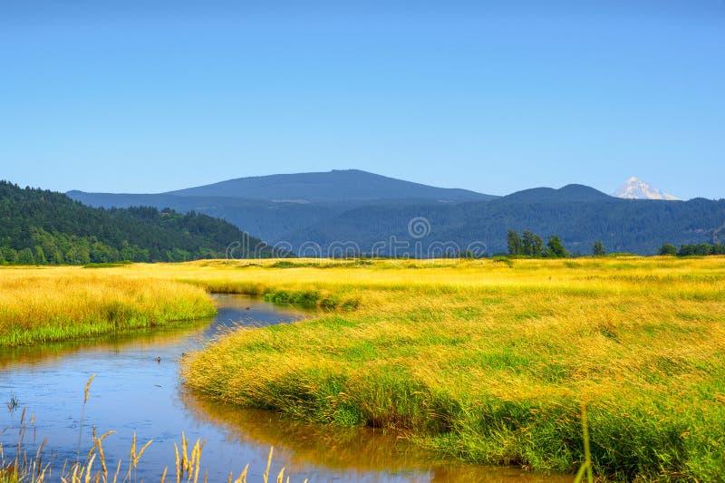 Wetlands of Steigerwald Lake National Wildlife Refuge royalty free stock image