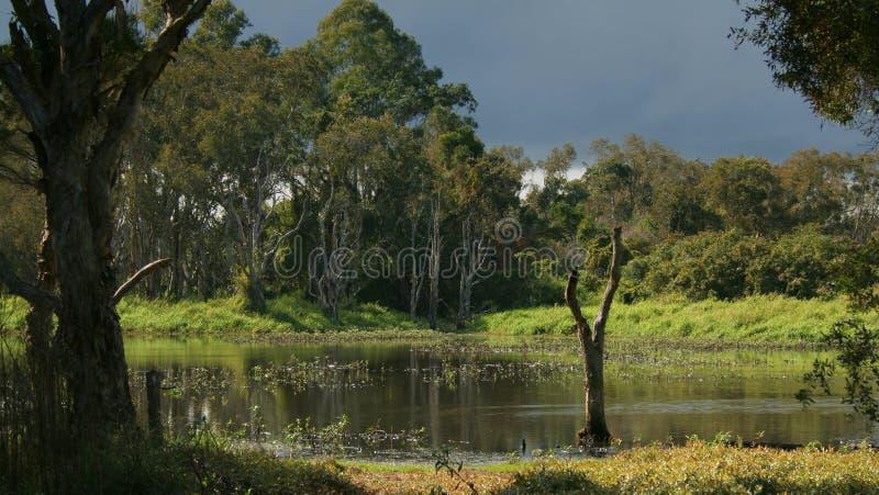 Wetlands Storm 3 stock photography