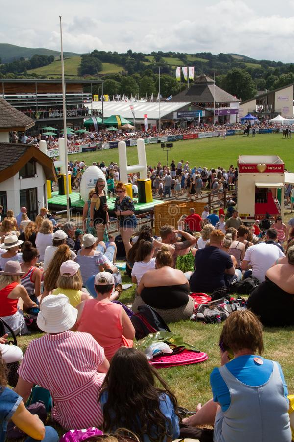 Wettbewerb 'Royal Welsh Show Cob Hengst' stockfoto