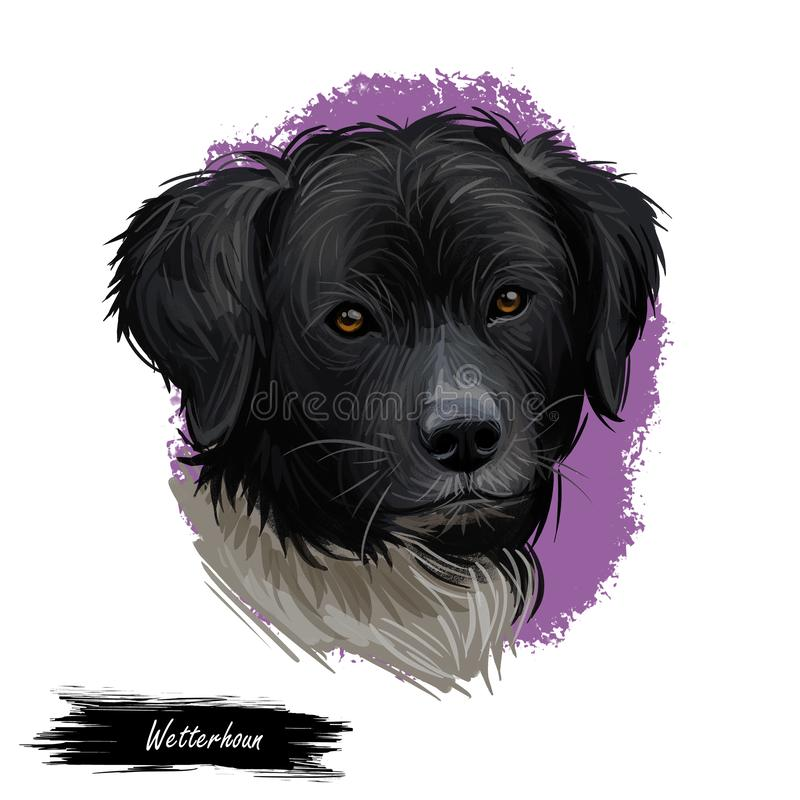 Wetterhoun or Frisian Water dog breed portrait isolated on white. Digital art illustration, animal watercolor drawing of hand stock illustration
