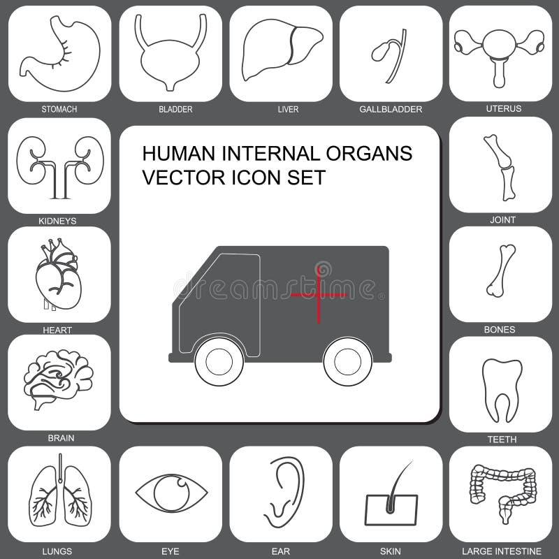 Wewnętrzne ludzkich organów ikony ustawiać w płaskim projekcie projektują ilustracja wektor