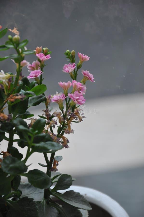 Wewnętrznej dekoraci fotografia, obraz, życie, etc, wciąż, piękne kwiaty zdjęcia royalty free