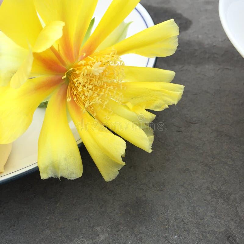 Wewnętrznej dekoraci fotografia, obraz, życie, etc, wciąż, piękne kwiaty zdjęcia stock