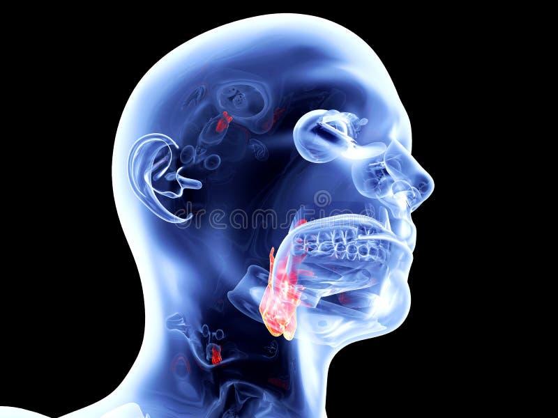 Download Wewnętrzni organy - krtań ilustracji. Ilustracja złożonej z intubacja - 28963589