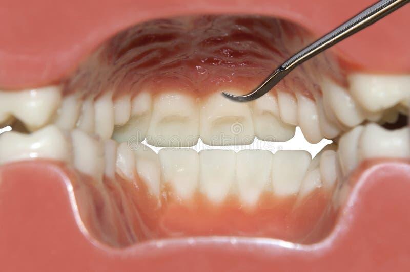 Wewnętrzny widoku usta: zębów czyścić obraz royalty free