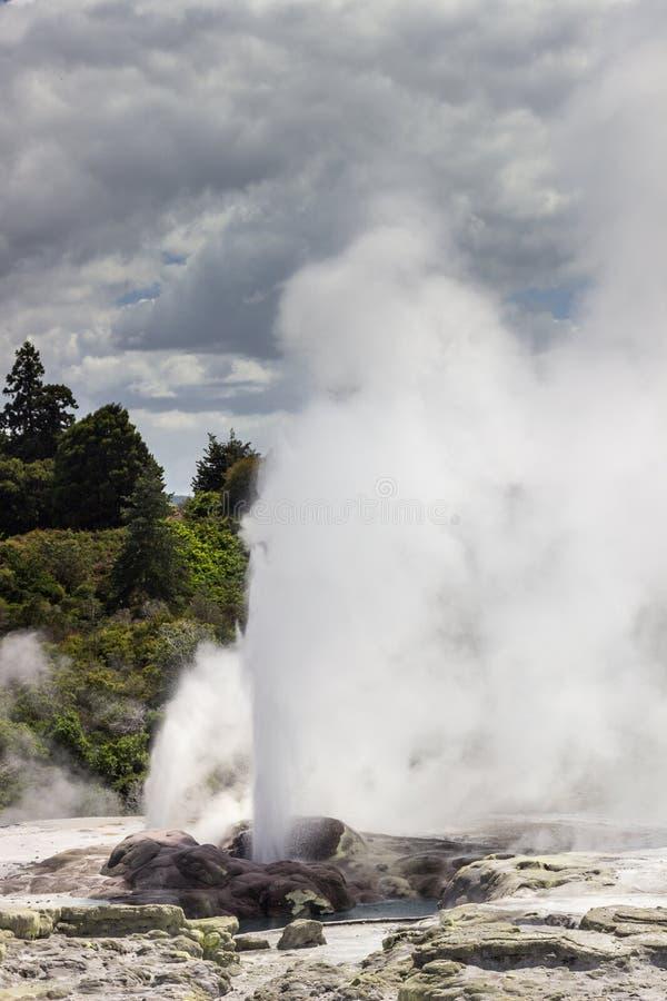 Whakarewarewa termiskt geyserområde royaltyfri bild