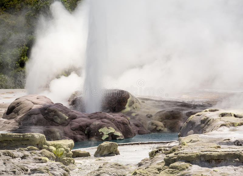 Whakarewarewa termiskt geyserområde fotografering för bildbyråer