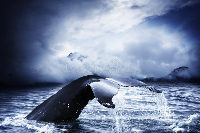 Whale. A humpback whale in a stormy sea