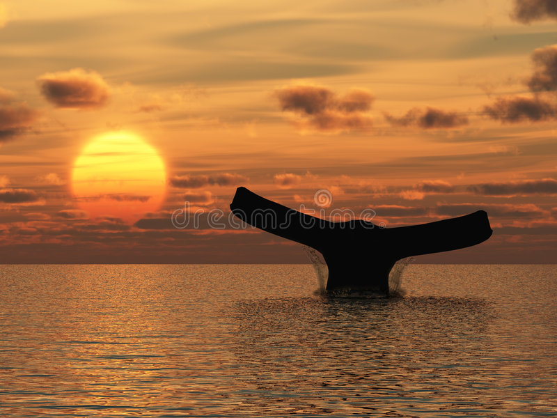 Whale. A tail of the sea mammal on a background sunset