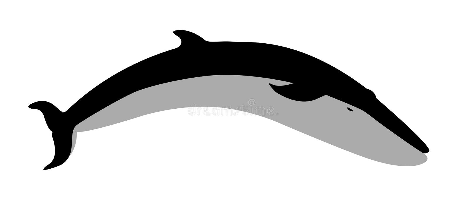 Whale royalty free stock photography