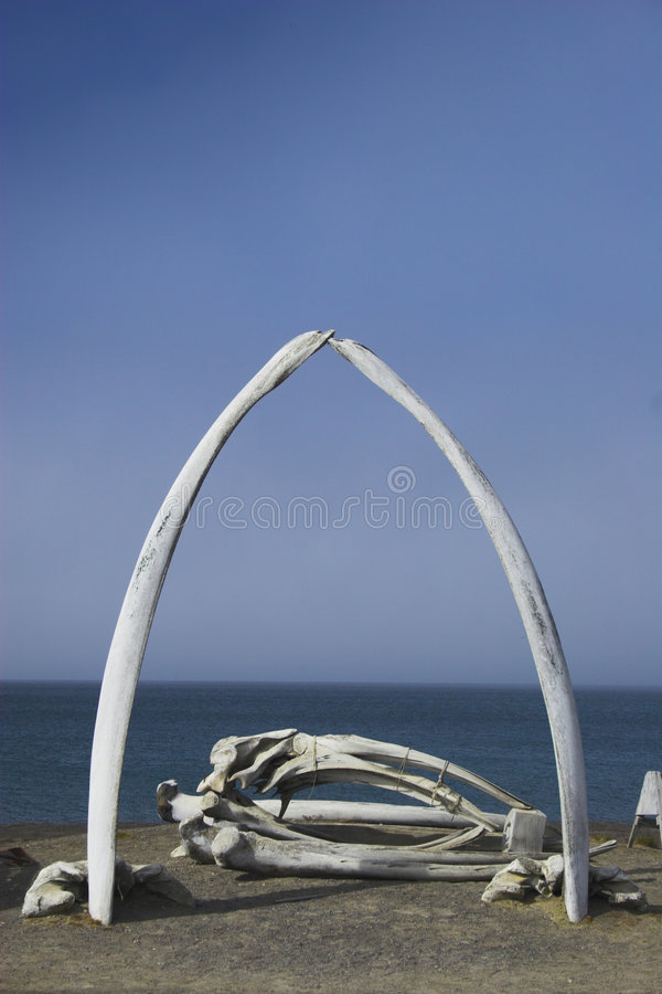 Whale bones. Various views and structures of whale bones in native whaling village on Arctic Ocean shore royalty free stock photography