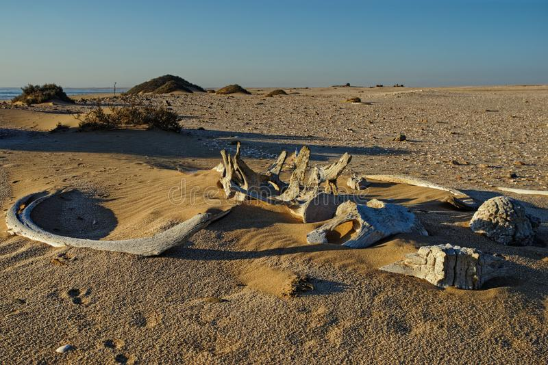 Whale bones, Meob Bay whaling station, Namibia, Africa. Whale bones, bleached in the sun lying on the sand at Meob Bay whaling station, Namibia, Africa stock photography