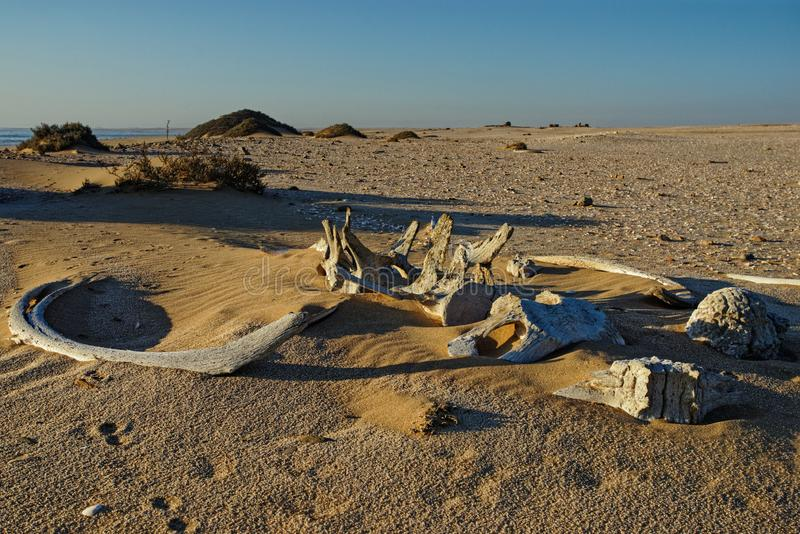 Whale bones, Meob Bay whaling station, Namibia, Africa. Whale bones, bleached in the sun lying on the sand at Meob Bay whaling station, Namibia, Africa royalty free stock photos