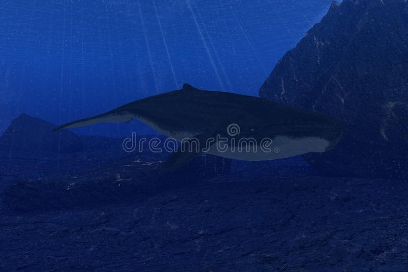 Whale In The Deep Sea Stock Illustration Illustration Of