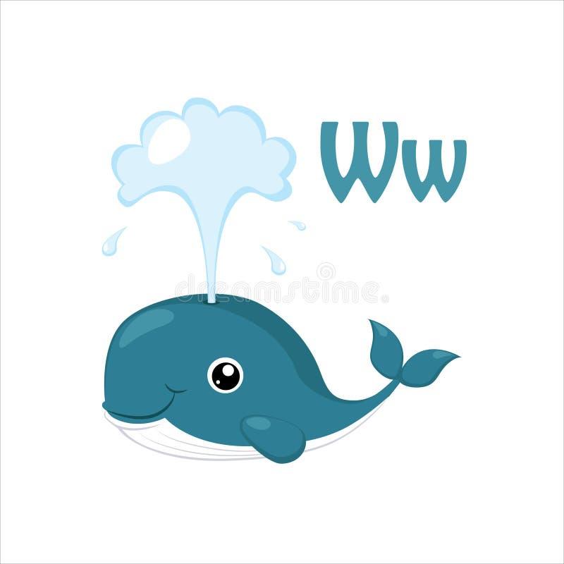 Whale. Funny Alphabet, Animal Vector Illustration. Whale. Funny Alphabet, Colourful Animal Vector Illustration royalty free illustration
