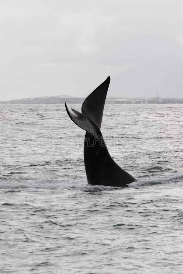 Whale greeting royalty free stock photos