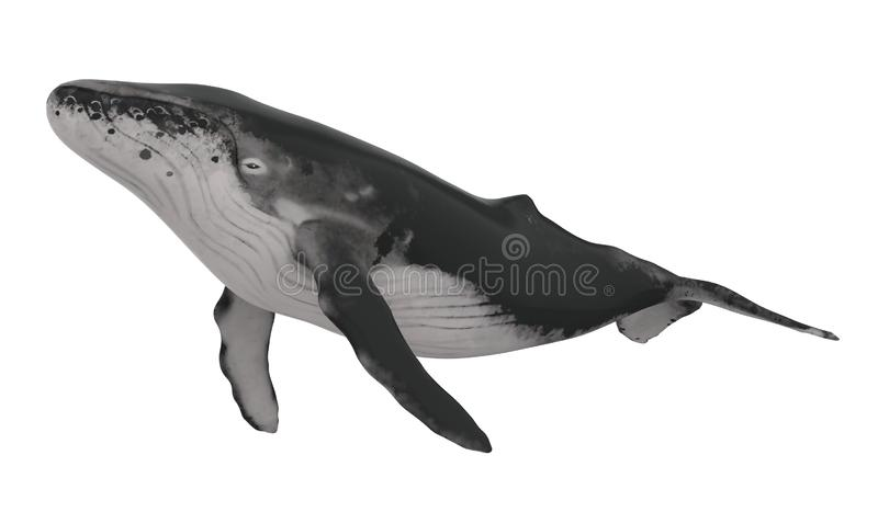Whale Isolated. On white background. 3D render royalty free illustration