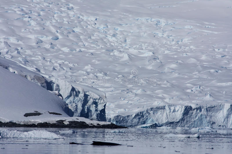 Download Whale In Paradise Harbor, Antarctica Stock Image - Image: 13044927