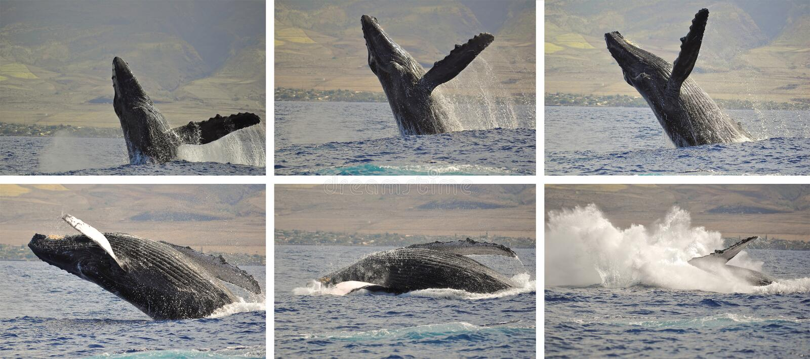 Download Whale photo sequence stock image. Image of play, giant - 20129083