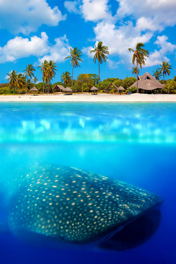 Free Whale Shark Below Stock Images - 35377394