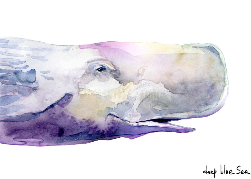 Whale. sperm whale watercolor illustration. royalty free illustration