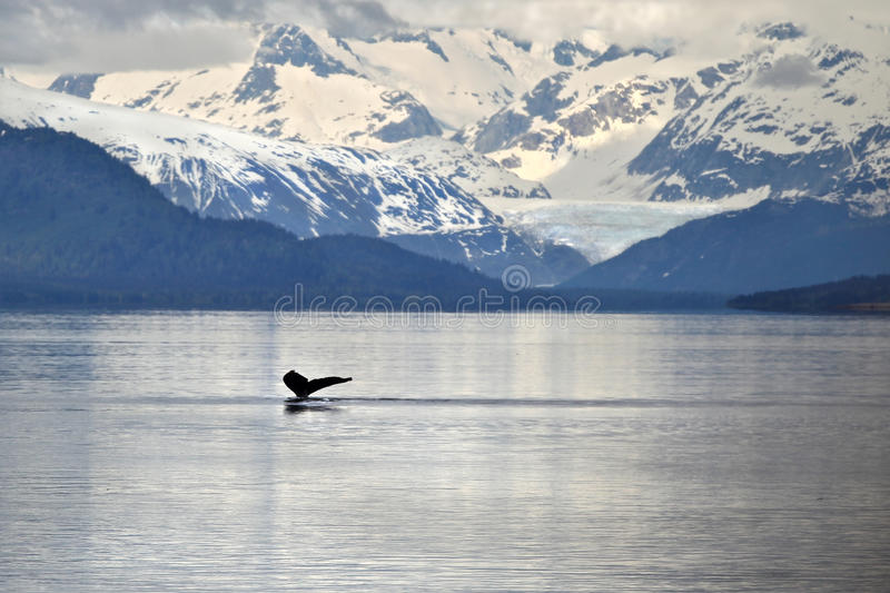 Whale tail against icy mountains stock photo