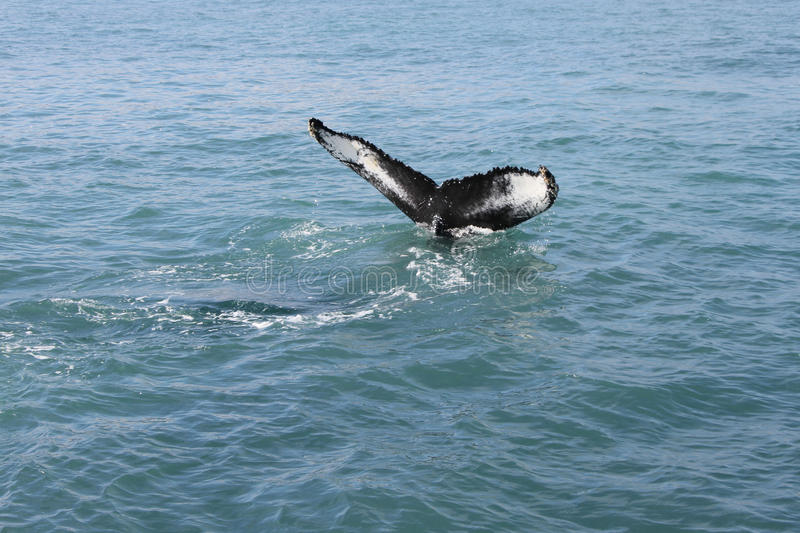 The whale tail stock photo