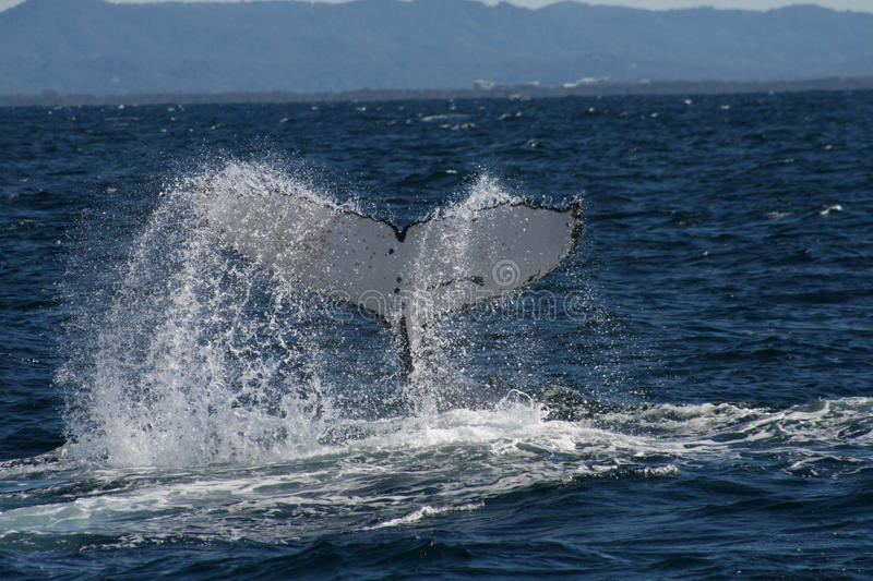 Whale Tale stock photography
