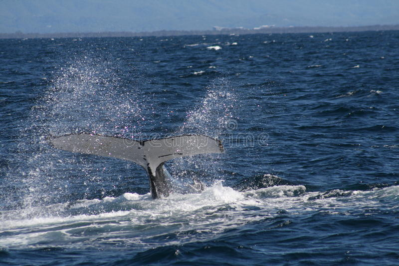 Whale Tale stock photo