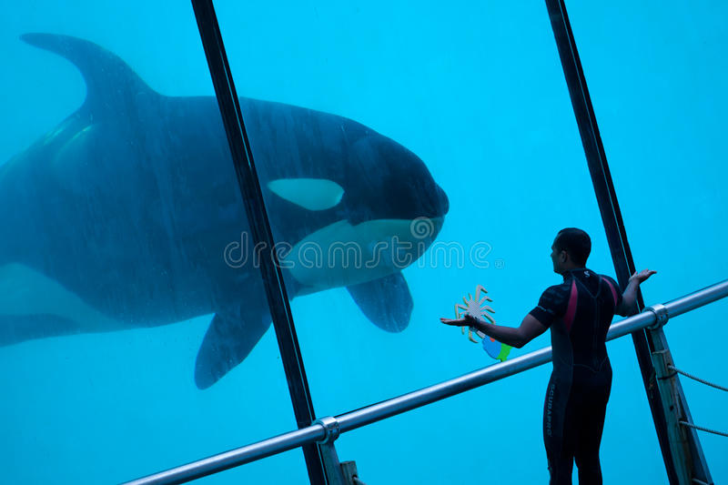 Download Whale Trainer Editorial Stock Photo - Image: 27459198