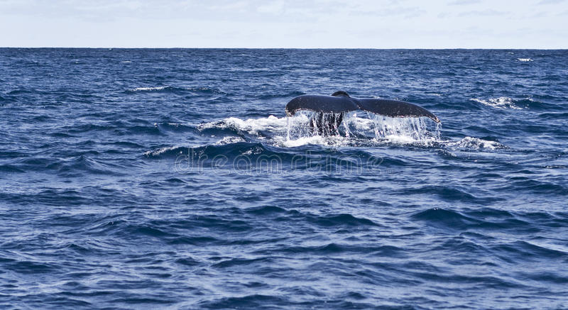 Download Whale Watching Stock Photos - Image: 23972963