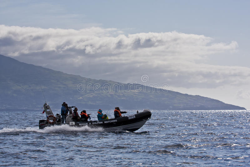 Download Whale watching editorial stock photo. Image of sanctuary - 25015818