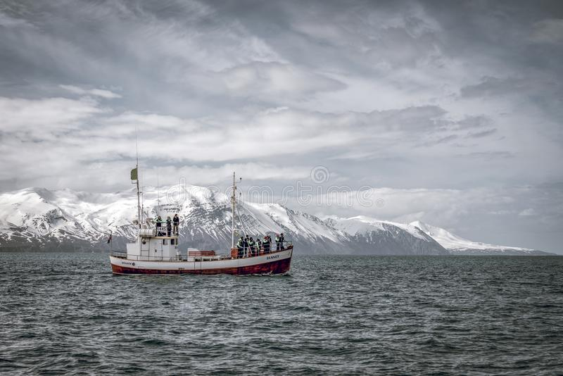 Whale watching boat in springtime Iceland. People are scouting for humpback whales stock images