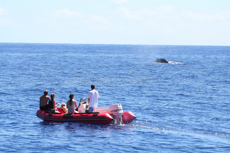 Whale watching from an inflatable boat stock photo