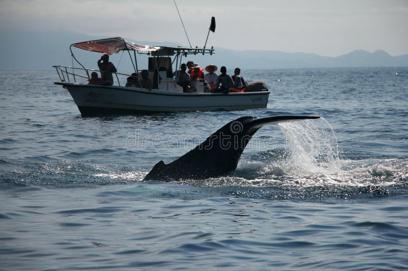 Whale Watching stock images