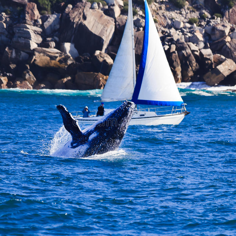 Whale Yacht stock image