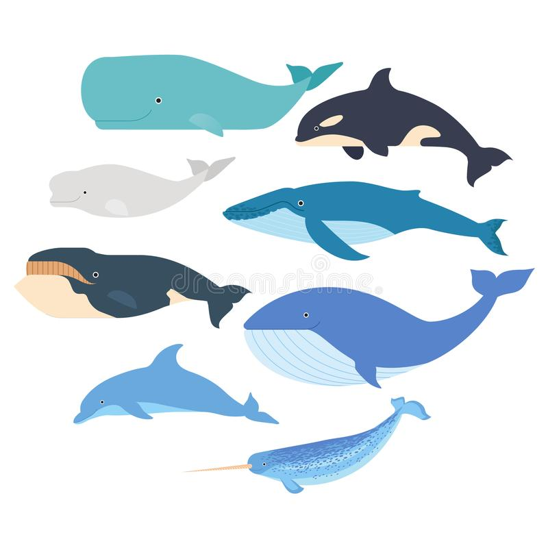 Whales and dolphin set. Marine mammals illustration. Narwhal, blue whale, dolphin, beluga whale, humpback whale, bowhead. And sperm whale vector on white royalty free illustration
