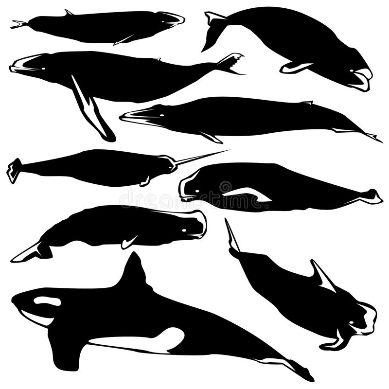 Free Whales In Vector Silhouette Royalty Free Stock Photography - 9158647