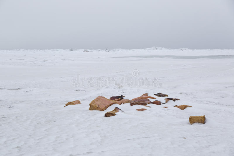 Arctic sea and whale pieces royalty free stock photo