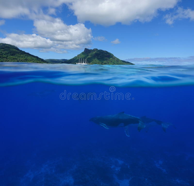 Whales underwater split with island at the horizon. Over and underwater sea, humpback whales with an island and a cruise ship at the horizon split by waterline royalty free stock image