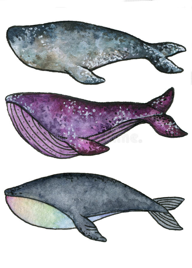 Whales vector illustration