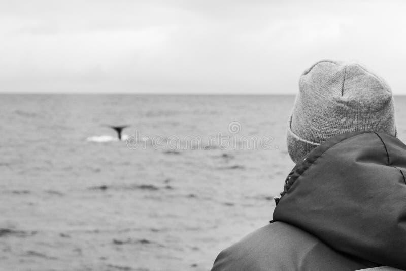 Whalewatching sull'Islanda immagini stock libere da diritti