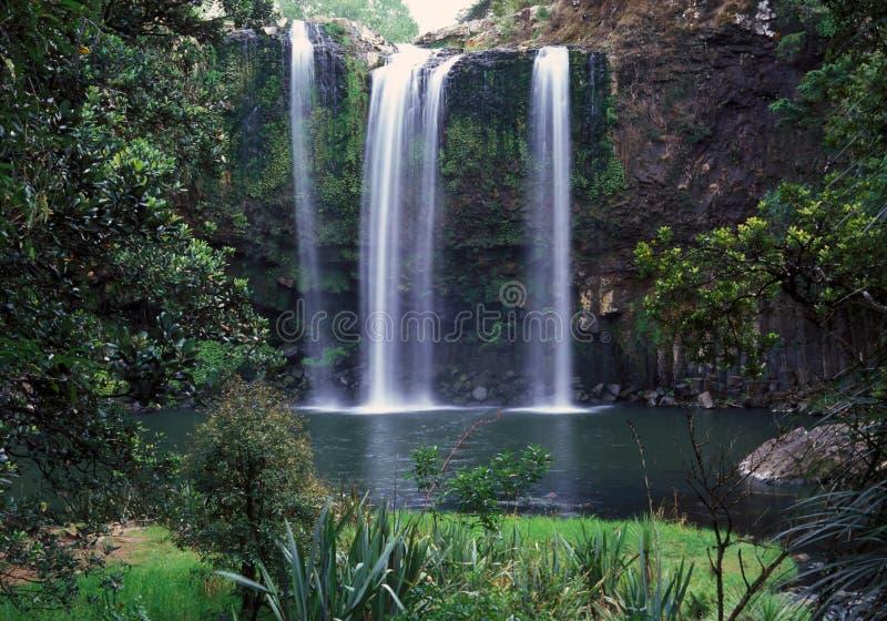 Whangarei falls stock photography