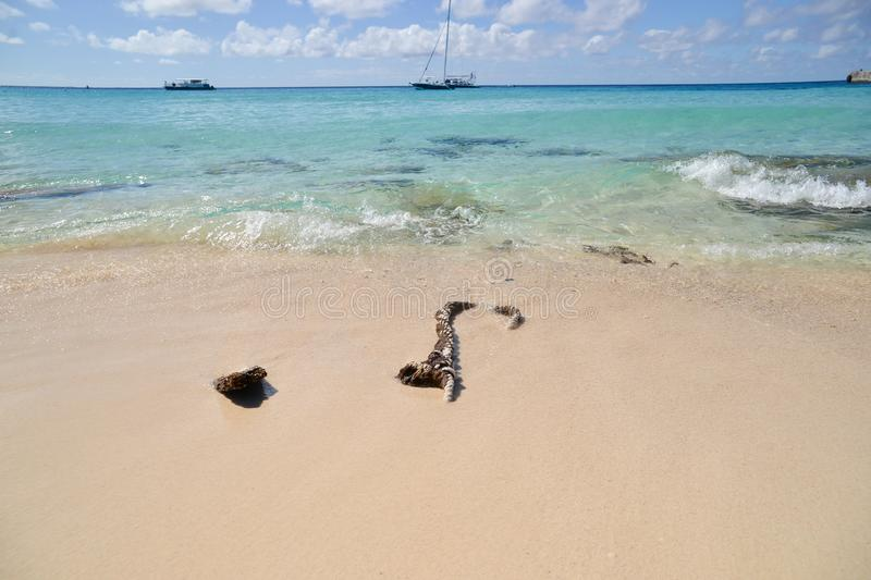 What's left behind, a rope left to rot in the sand on a tropical beach. stock images