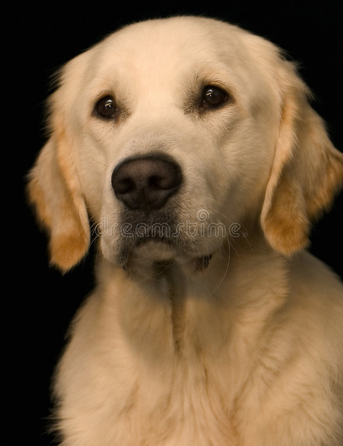 What a dog.. royalty free stock photography