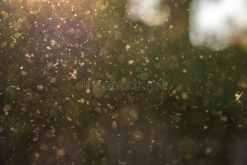 Dust, pollen and small particles fly through the air in the sunshine. royalty free stock photography