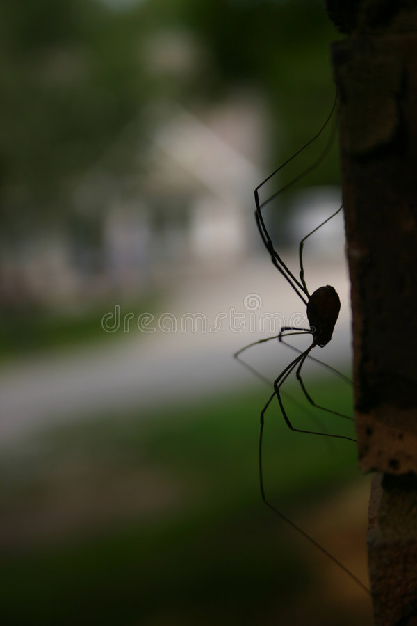 Download What's around the corner? stock photo. Image of spooky, nature - 17044