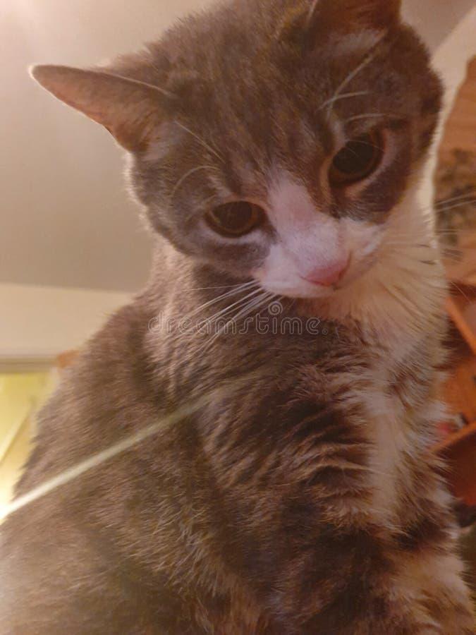 What& x27; s che gattino? fotografia stock libera da diritti